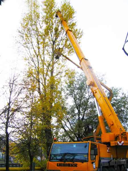 304 52 05 валка удаление дерева частями